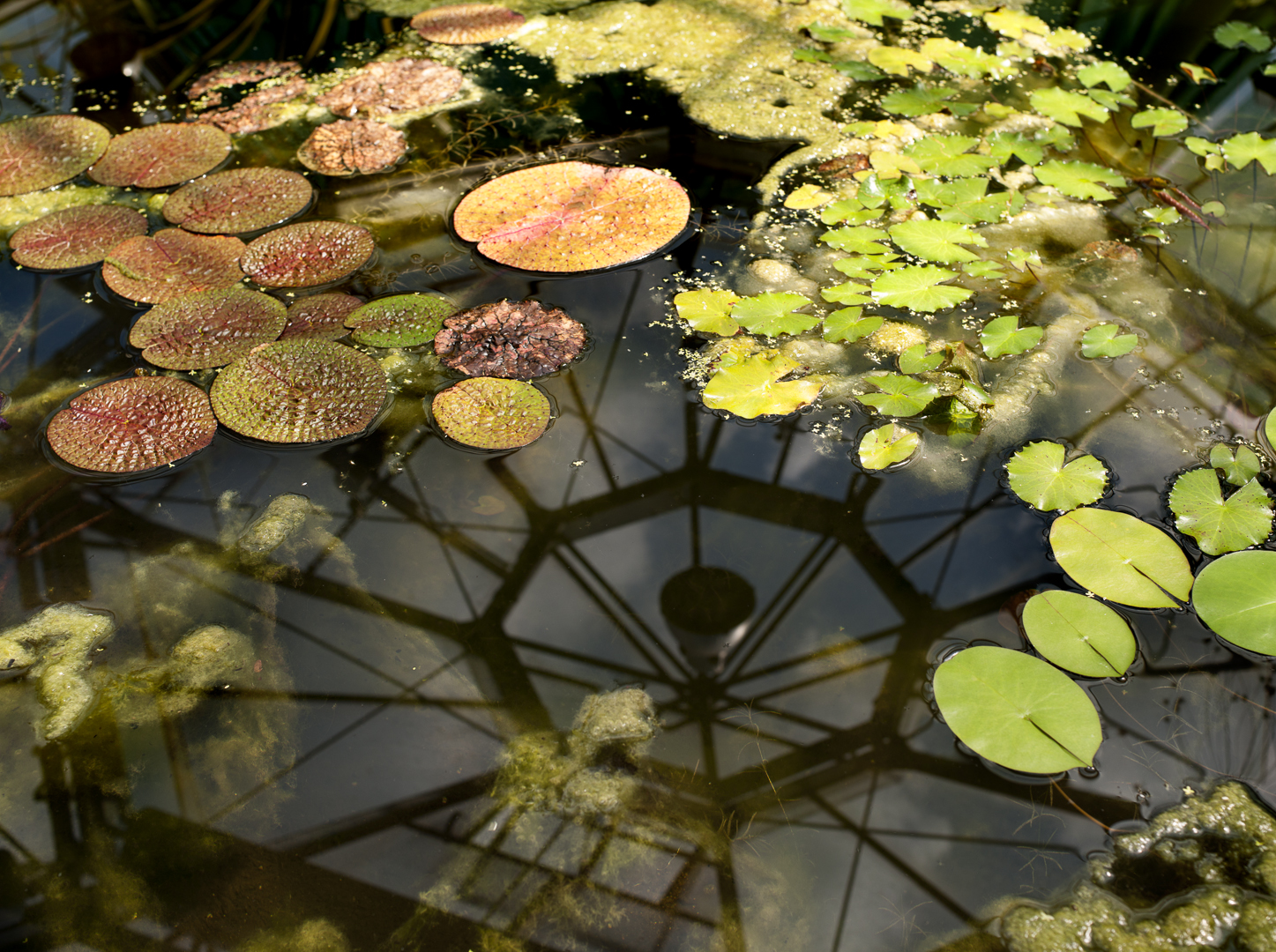 botanicgarden_adam_urban_0015